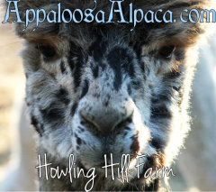 Your source for Harlequin Appaloosa alpacas